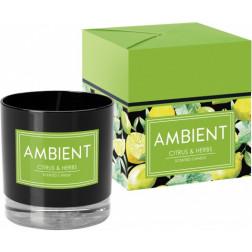 Ekskluzywna świcea zapachowa Ambient Citrus & Herbs